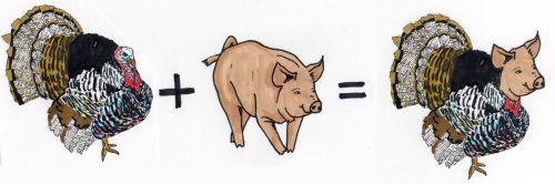 Ein Truthahn plus ein Schwein ist gleich ein Trutschwein